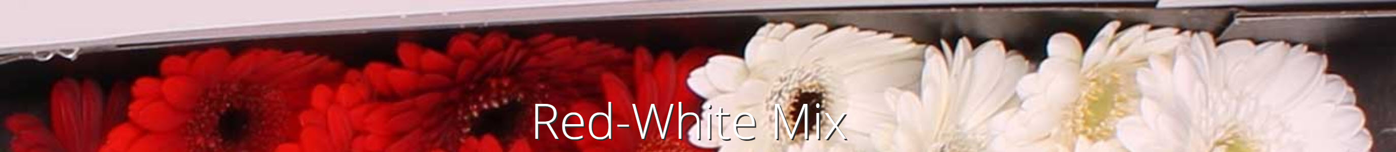 redwhitemix jacoudijk