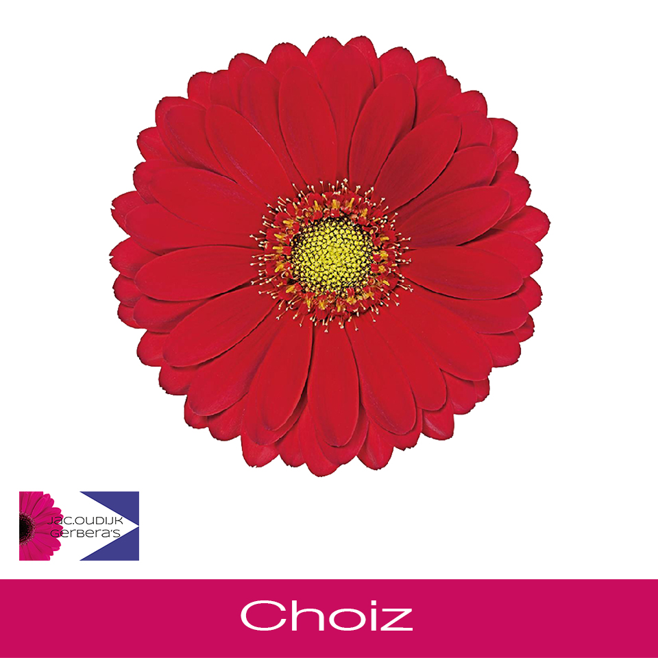 Choiz
