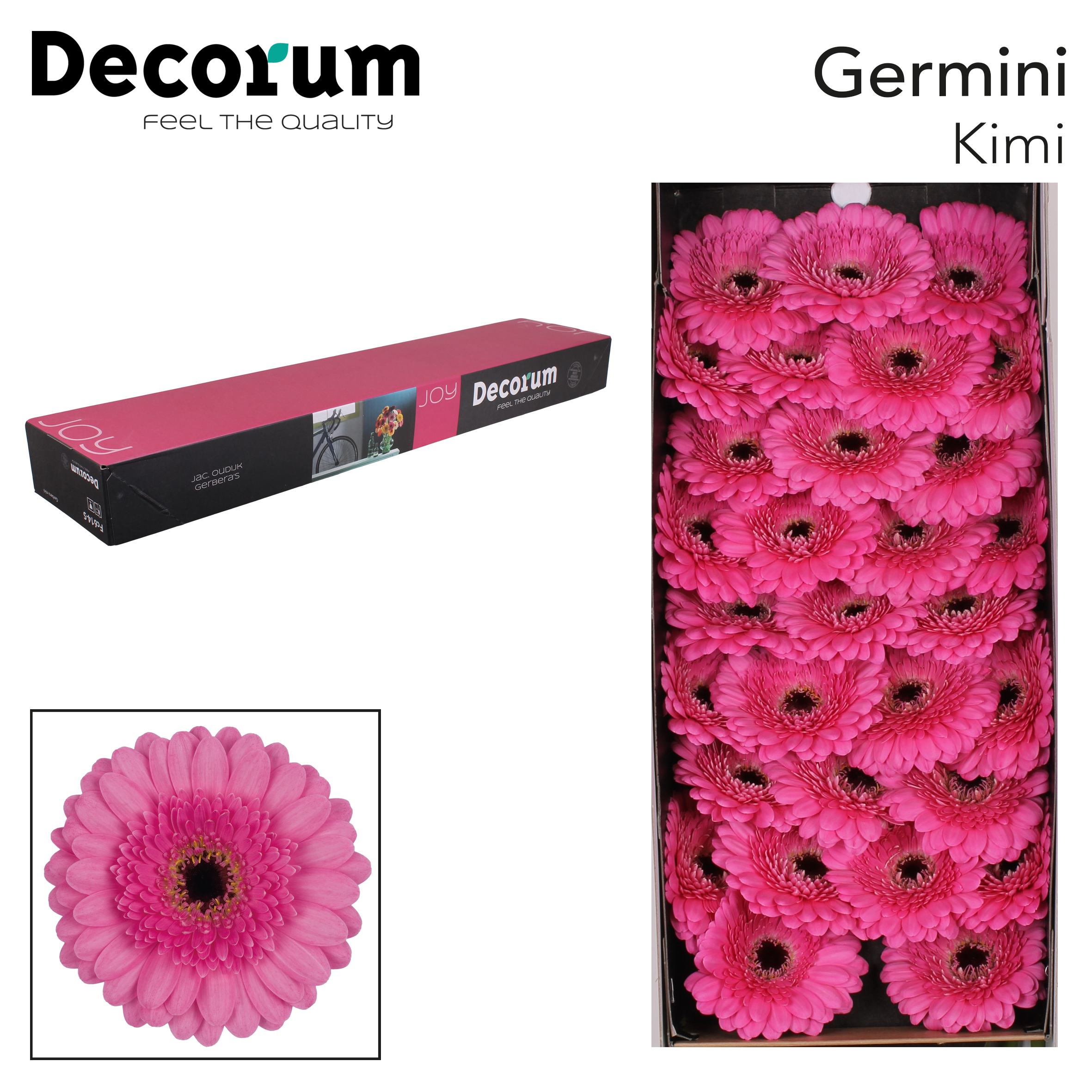 38. Kimi - doos-roze-zwartoog