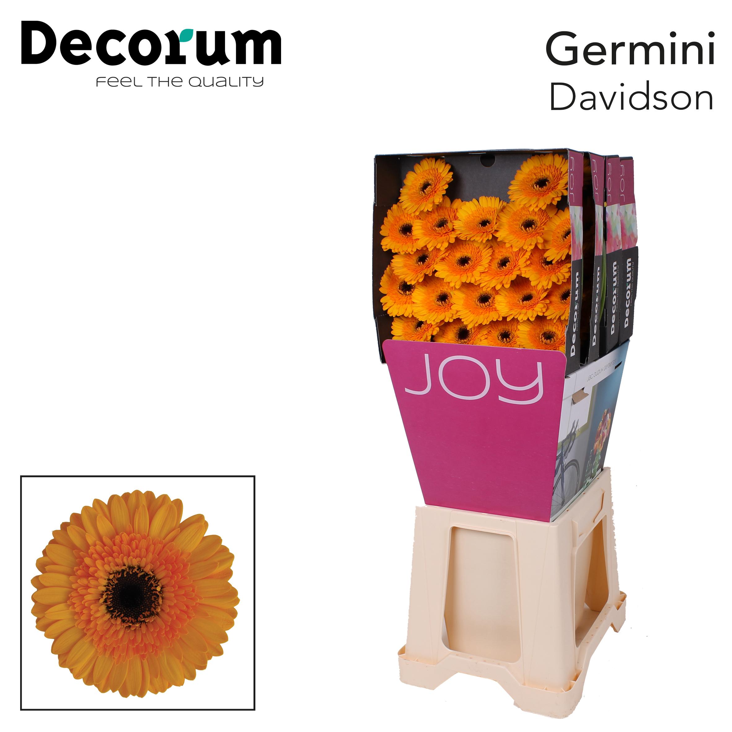 15. Davidson-Dia-oranje-zwartoog