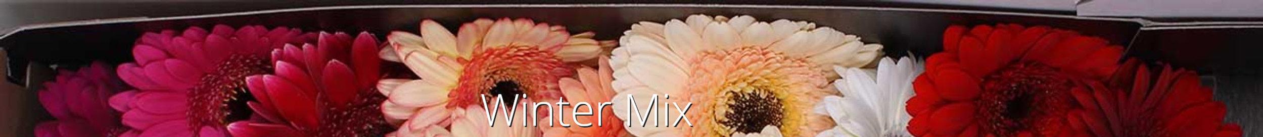 winter mix.jpg