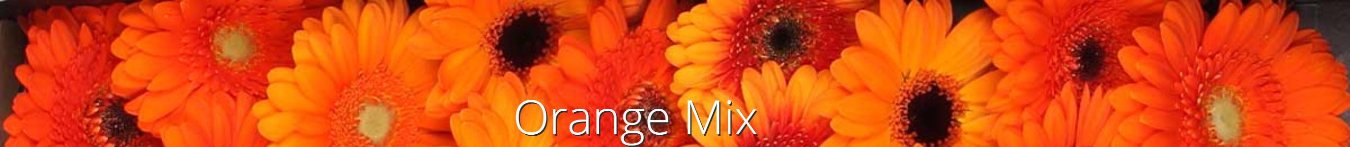 orangemix jacoudijk