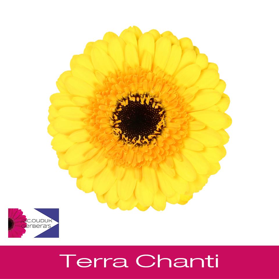 Terra Chanti