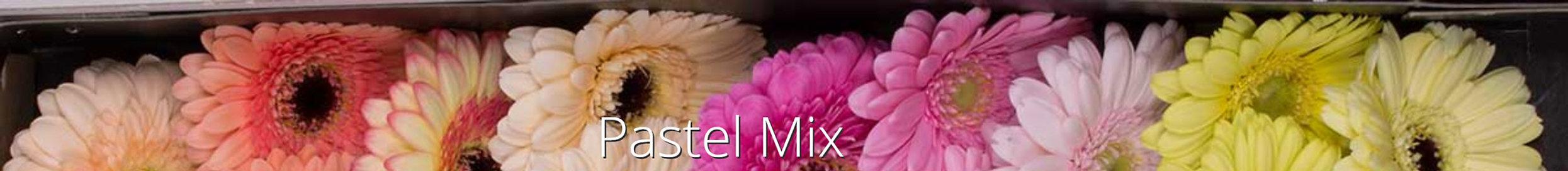 pastel mix.jpg