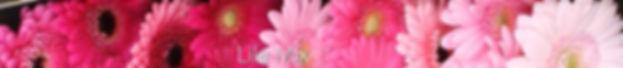 lila mix.jpg
