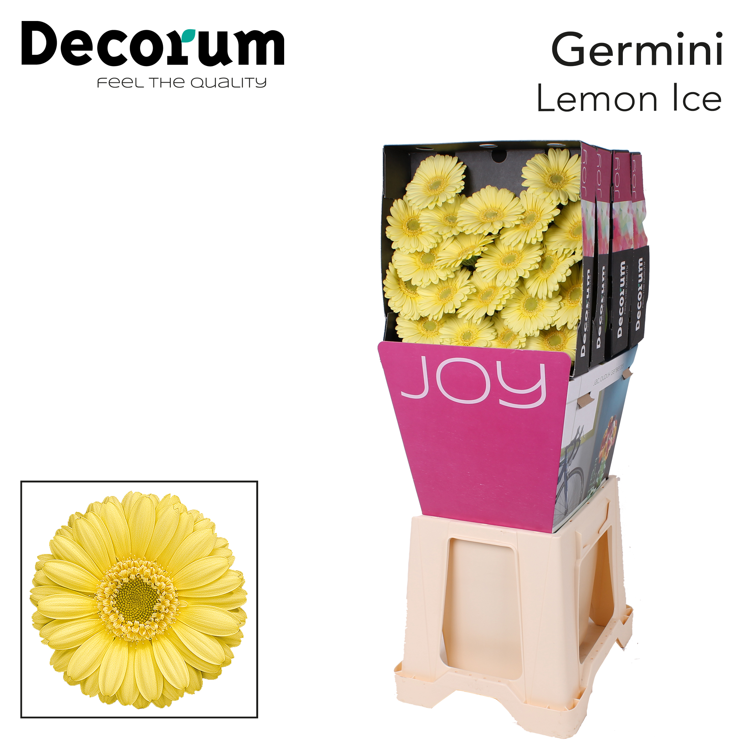 9. Lemon Ice-Dia-lemon-groenoog