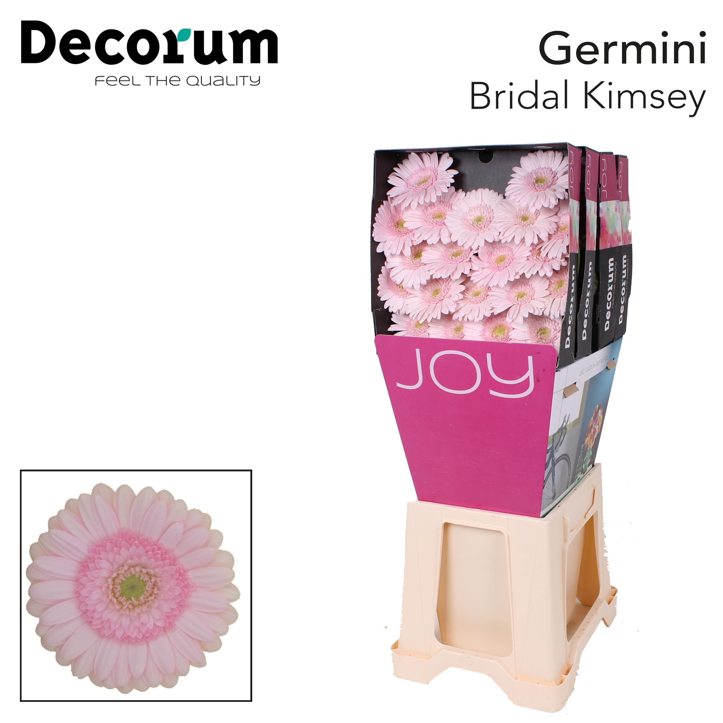 33. Bridal Kimsey-Dia-roze-groenoog
