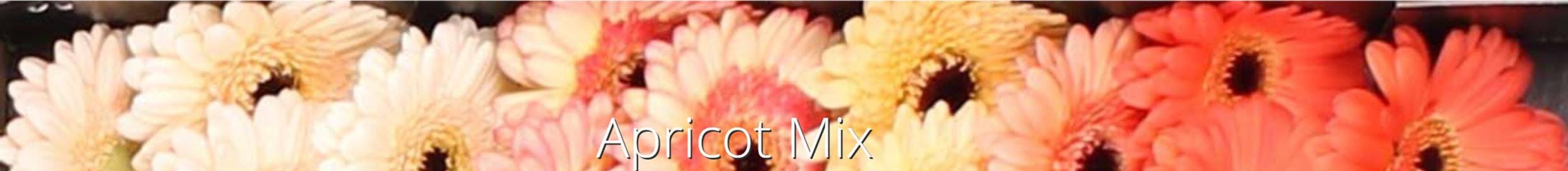 apricot mix.jpg