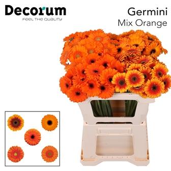 4. Orange Mix