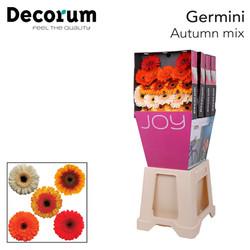 11. Autumn Mix