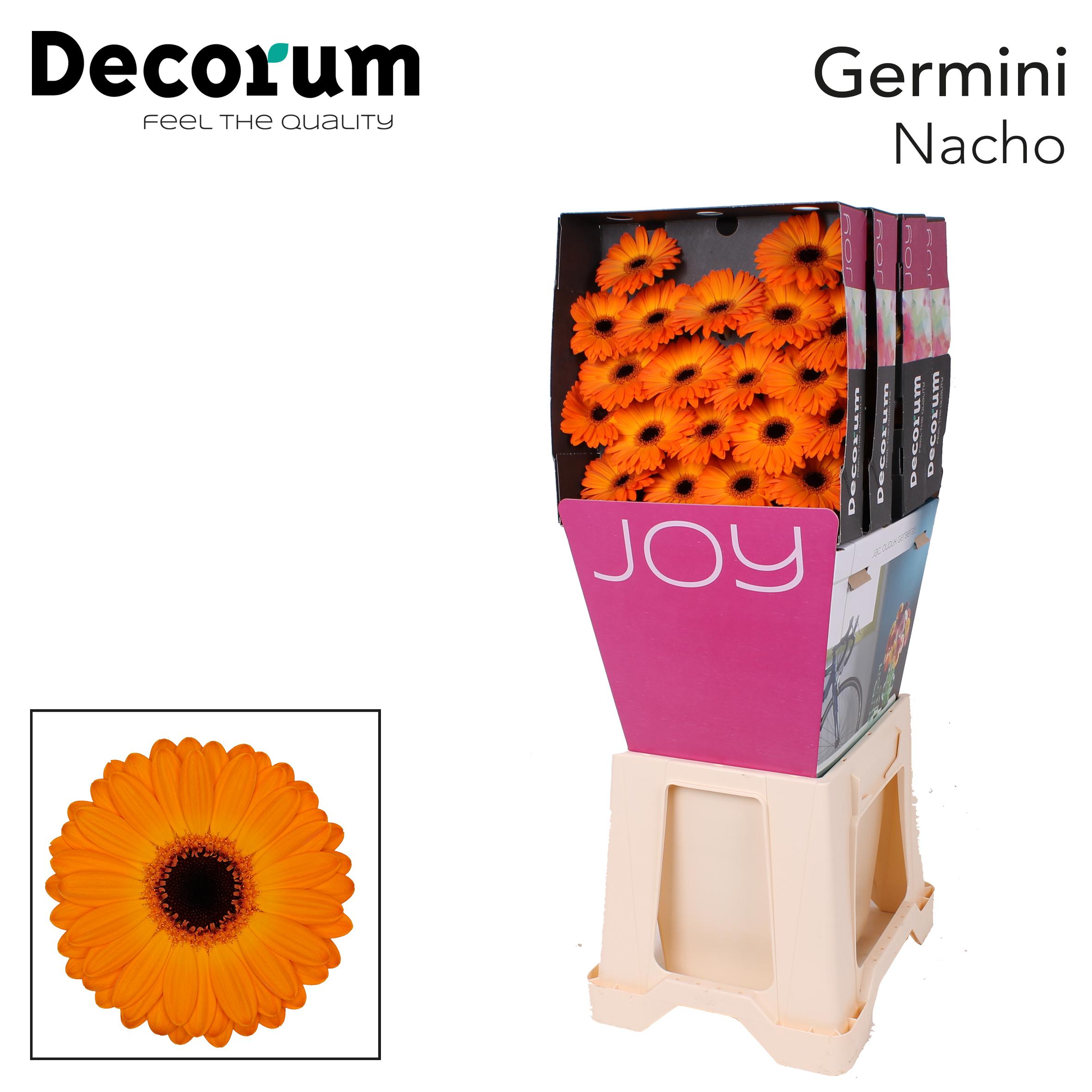 20. Nacho-Dia-oranje-zwartoog