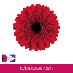 Masserati