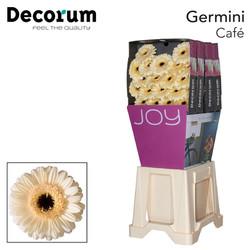 6. Café-Dia-crème-zwartoog