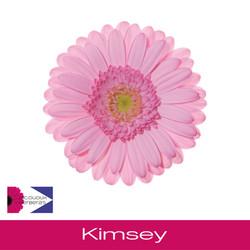 Kimsey