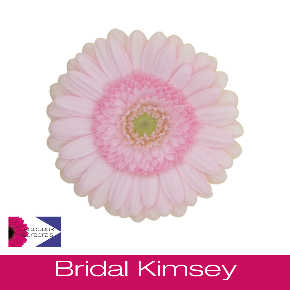 Bridal Kimsey
