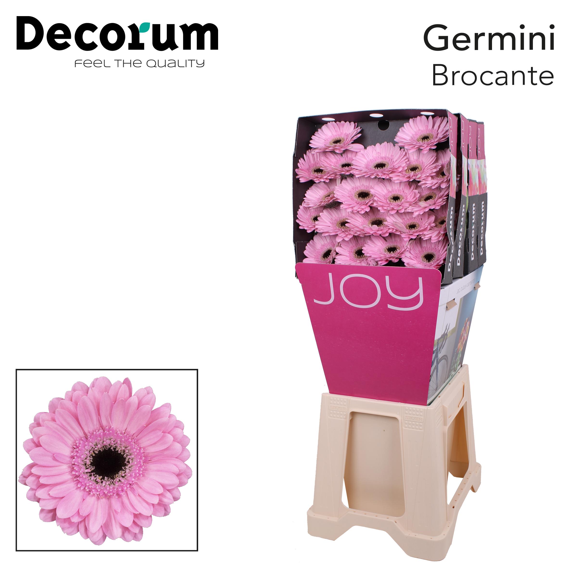 32. Brocante-Dia-roze-zwartoog