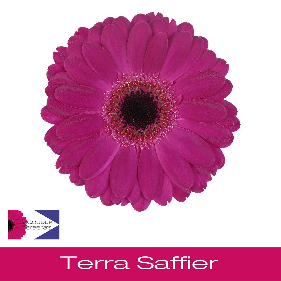 Terra Saffier