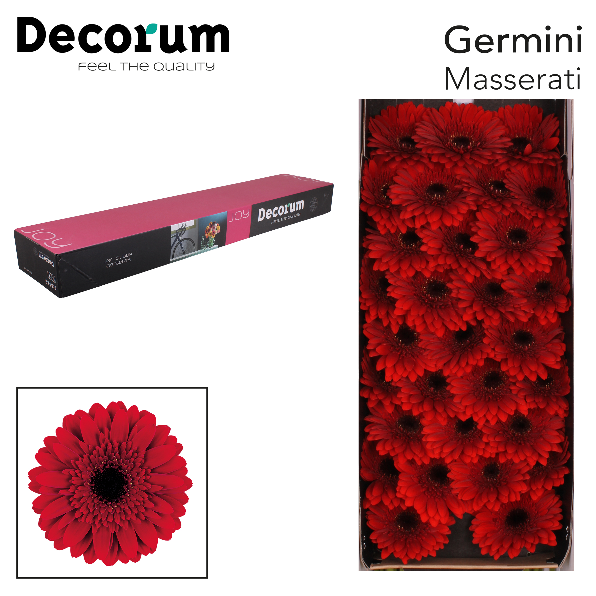 56. Masserati - doos-rood-zwartoog
