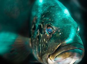 fish protein.jpeg