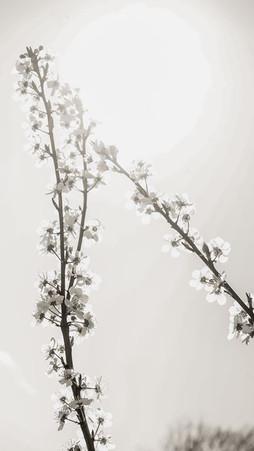Spring Blossom, Berlin