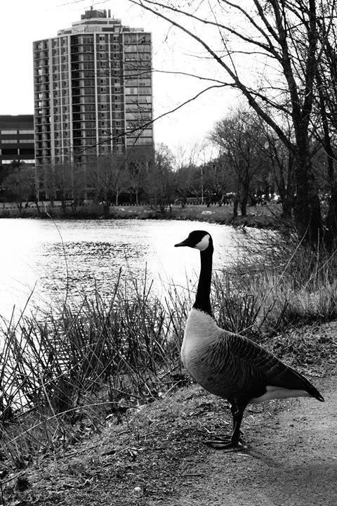 Canada Goose, Boston