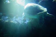 Turtle, Aquarium Boston