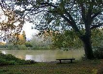 Holmwood Common.jpg