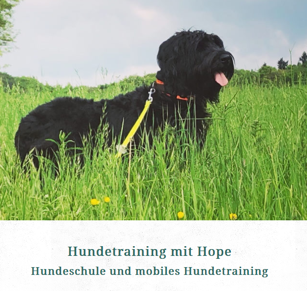 Hundetraining Julia Ripp