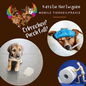 Leidet Dein Hund häufiger unter Durchfall...?