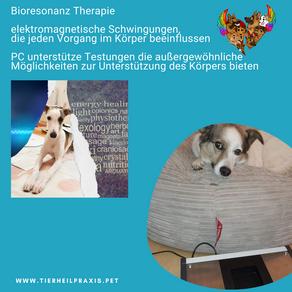 Bioresonanz - Wellness für Dein Tier - 2