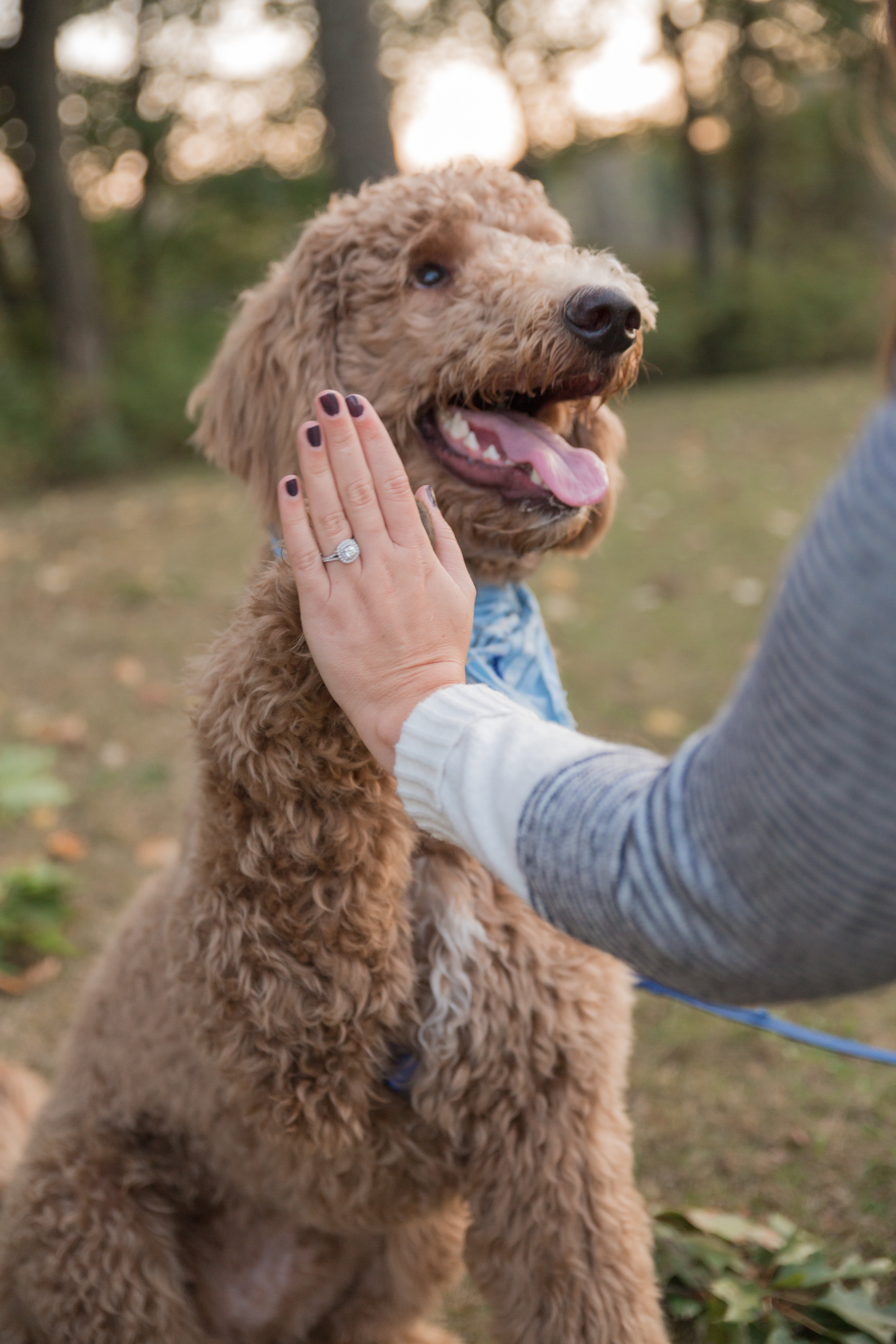 engagement ring and dog