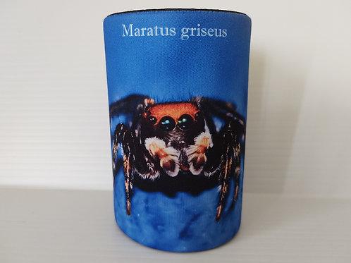 Maratus griseus Stubby Cover