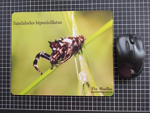 Sandalodes Bipenicillatus Mouse pad