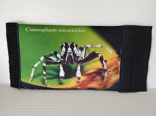 Cosmophasis micarioides Stubby Cover