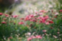 咲き誇る野花