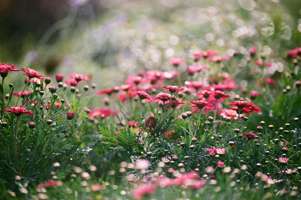 Glaubenssätze sind wie Blumen, gestalte Deinen Seelengarten, wie er Dir gefällt.