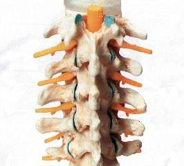 Неврология. Новый взгляд медицины на остеопатию