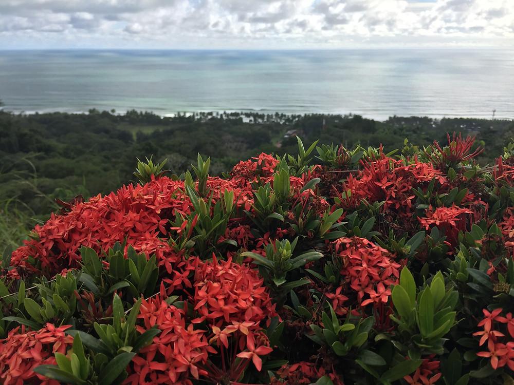 costa rica plant life