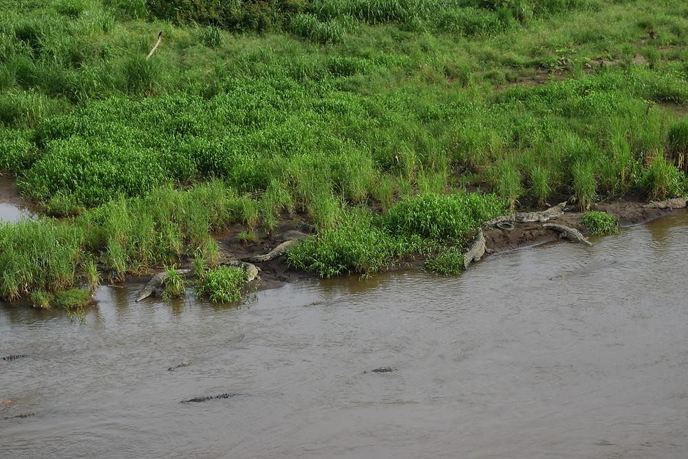 crocodile bridge Costa Rica