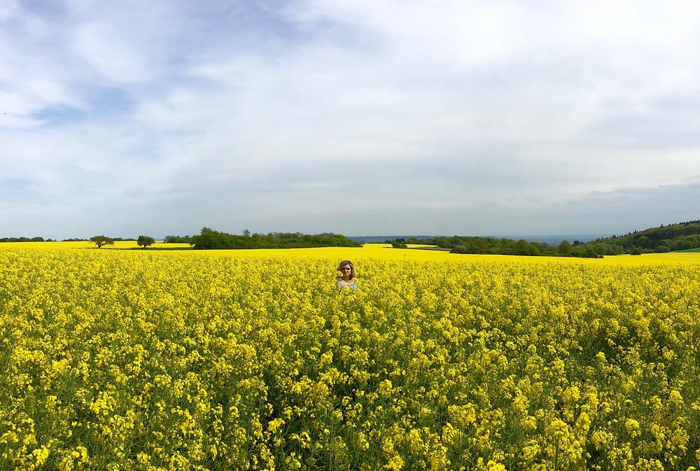 German rapeseed flower