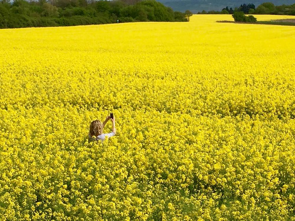 German rapeseed flower field