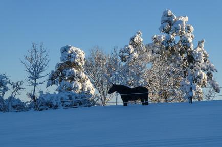 210115 Winterwunderwelt Jungnau 022.JPG