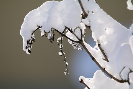 210115 Wintermärchen Jungnau 002.JPG