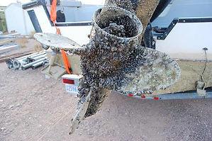 CFC_mussels.jpg