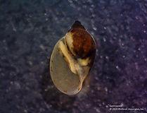 gastropoda_pouch.jpg