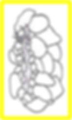 glossosomatidae.jpg