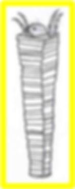 brachycentridae.jpg