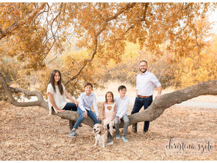 Walnut Creek Mini Sessions