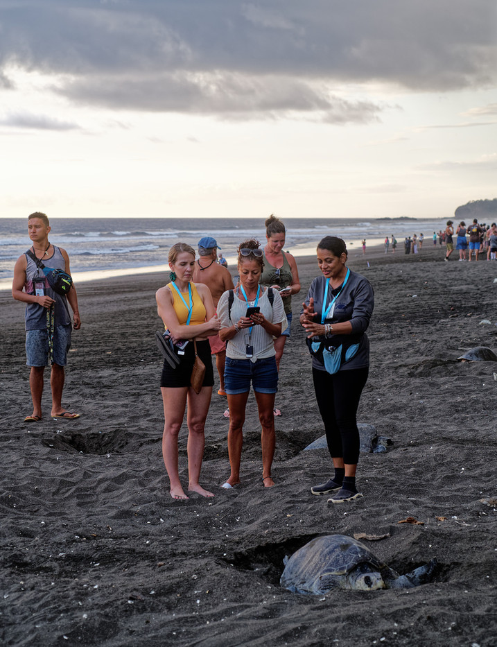 A sustainable tourism program to observe the nesting process of a sea turtle. Costa Rica.
