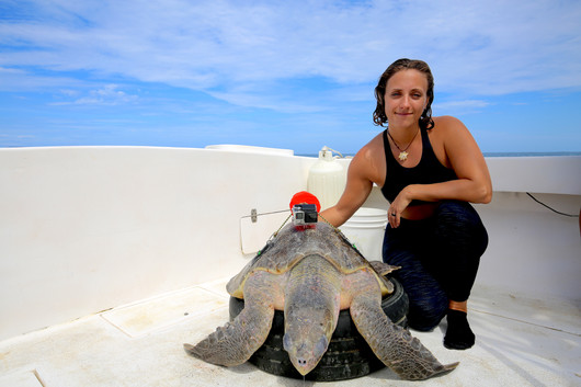 """Dr. Vanessa Bezy fits sea turtles with a """"TurtleCam"""" to study their behaviour at the Ostional National Wildlife Refuge, Costa Rica."""